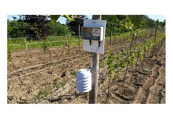 Efento Logger monitoruje temperaturę w winnicach